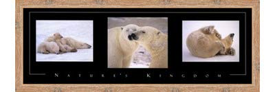 Poster Palooza Framed Nature's Kingdom-Polar Bears- 36x12 Inches - Art Print (Natural Knotty Frame)