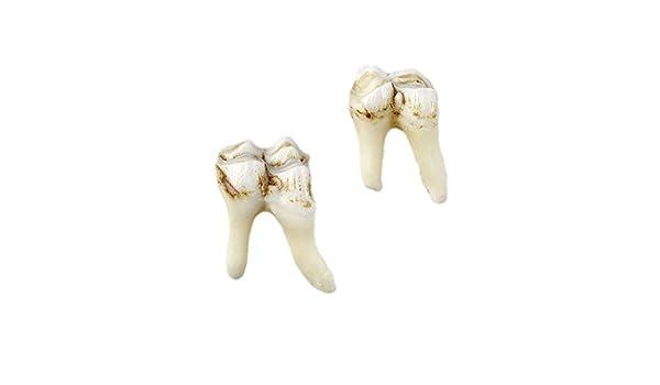 Alce dientes Gemelos: Amazon.es: Joyería