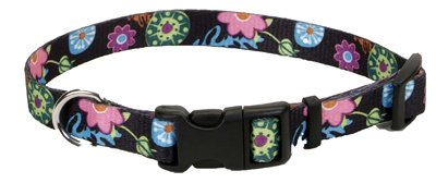 Coastal Pet 06902 A WDF26 Adjustable Collar, 1-Inch, Wildflower