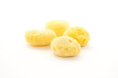 Hermit Crab Sea Sponges | Natural Sea Sponges for Hermit Crab Habitats| Four Set Sea Sponges 1 1/2