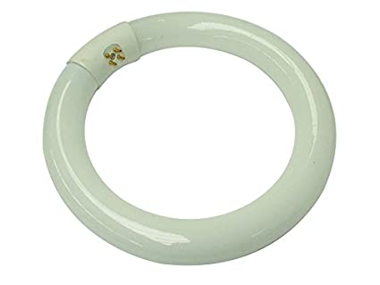 Velleman tube fluorescent circulaire w blanc froid amazon