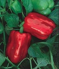 Emerald Giant Sweet Pepper Seeds 150 Seeds By JaysseedsTM Upc 643451294842 (Yellow Bell Tomato Seeds compare prices)