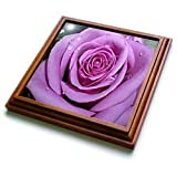 Flowers - Purple Rose - Trivets