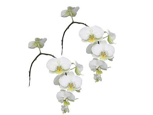 Real Touch Latex Single Stem Orchid Branch for home decor, office, centerpieces, and wedding bouquets (Pack of 2) (Cool - Orchid White Bouquets