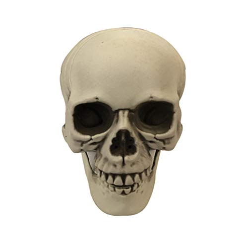Abrante 2 Pieces Skulls,Simulation Plastic Skeleton,for Halloween Party,Room Escape and Haunted House Decoration-Horror Props Cosplay Decorations ()