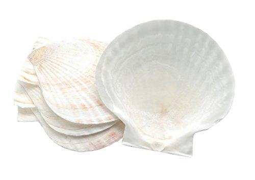 fox-run-large-natural-baking-shells-set-of-4