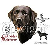 Black Labrador Retriever Adult T-Shirt, XLarge, Light Blue