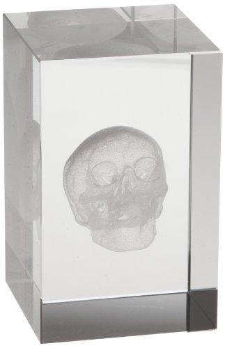 3B Scientific Medart Glass Block Skull Model, 2