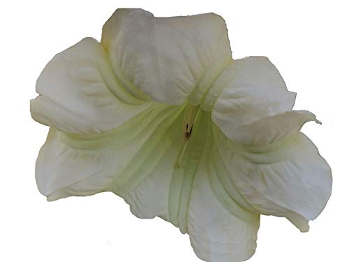 - IDA Brugmansia Angels Trumpet Live Tropical Plant Cream White Green Fragrant Flower Starter Size 4 Inch Pot Emeralds TM