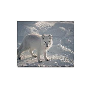 Amazoncom Jtmoving Wall Art Painting Animal Lovers Arctic