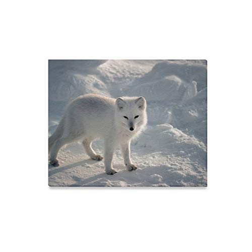 Arctic Canvas Print - DONGCBAO Wall Art Painting Animal Lovers Arctic Fox Wallpaper Prints On Canvas The Picture Landscape Pictures Oil for Home Modern Decoration Print Decor for Living Room