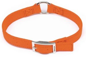 coastal pet products, inc. r2905 g sor18 Remington, 1 -Inch x 18 -Inch, Orange, Double Ply Dog Collar