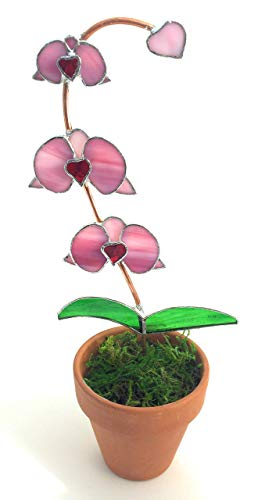 Pink Heart Stained Glass Orchid in Pot (Leaf Wispy)