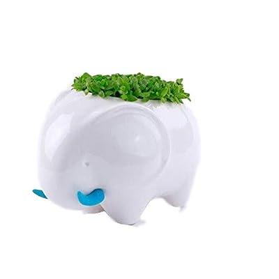 SPARIK ENJOY New Decorative Rhino Design White Mini Ceramic Plant Flower Pot Succulent Planter (Elephant): Garden & Outdoor
