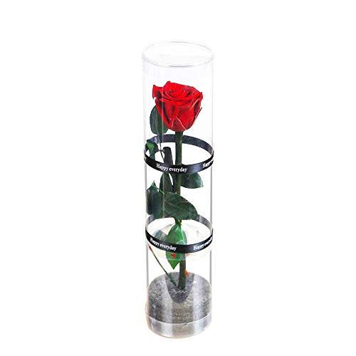 Dewanxin Rosa Eterna,Rosa Natural Preservada,para Decoración del Hogar Boda San Valentín Día de la Madre Navidad Aniversario Cumpleaños - Roja (Red)