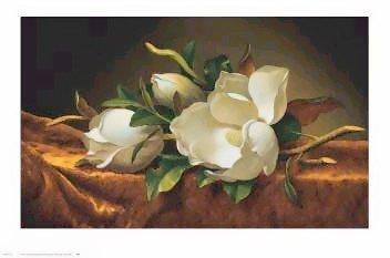 Magnolia Flower On Gold Velvet Cloth - Poster by Martin Johnson Heade (36 x 24)