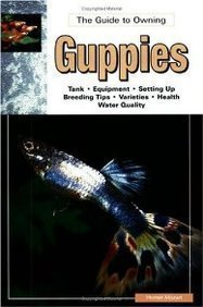 The Guide to Owning Guppies