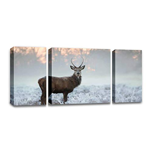CCArtist Young red Deer Buck Standing in The Frosted Grass on an Early Cold Wall Decoration Print Photo on Canvas Modern Photography Home Decor Modern Canvas Painting Wall Art