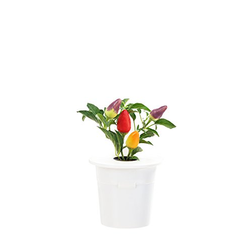 smart chili - 3