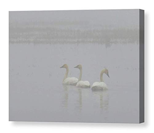 Foggy Grey Monochromatic Print on CANVAS Graceful Tundra Swans Nature Photography Dreamy Wall Art Ready to Hang 8x10 8x12 11x14 12x18 16x20 16x24 20x30