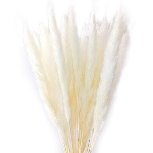 Dongliflower 50 Pcs Natural Dried Small Pampas Grass, Phragmites Communis,Wedding Flower Bunch, 24