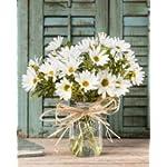 Petals-Farmhouse-Daisies-Silk-Arrangement-White