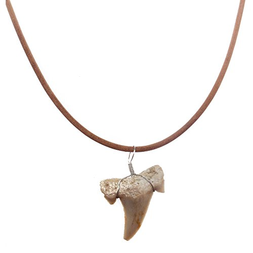 Frogsac Real Shark Tooth Necklace for Men Boys Teens Kids | Genuine Fossil Shark Tooth Pendant on Greek Leather Necklace | Mens Classic Surfer Necklace | Fashion Jewelry for Men by (Natural) (Frog Great Jewellery)