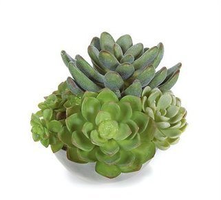 5in. Artificial Potted Succulents for Indoor Use