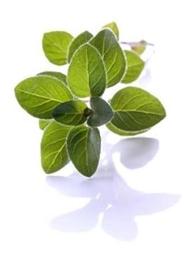 Organic Israeli Oregano 80 Seeds Imported Heirloom Herb Varietal Container 18mg