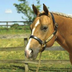 - Perri's Padded Leather Halter (Havana/Hunter Green, Horse)