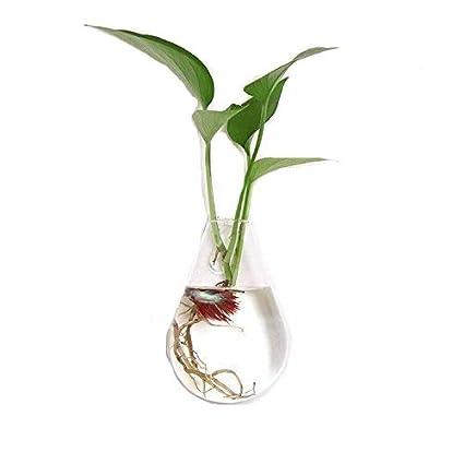 Amazon Com Anleking 2 Pack Hanging Glass Planter Terrarium