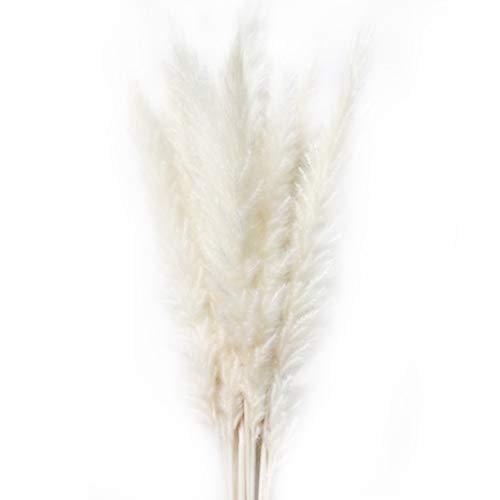 Pampas Plume - Yooha Dried Flower Bunch, 50 Pcs Natural Dried Small Pampas Grass Reed Plume Bouquets for Wedding and Photographing Home Decor(White)