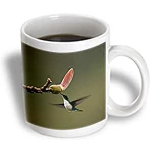 Danita Delimont - Birds - Purple-crowned Fairy bird, Mindo, Andes, Ecuador - SA07 POX2030 - Pete Oxford - 15oz Mug (mug_86401_2)