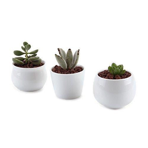 Succulent container garden ideas car interior design for Plantas decorativas amazon