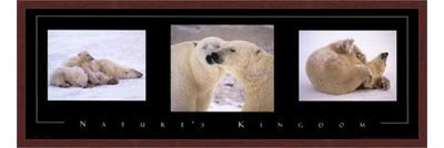 Poster Palooza Framed Nature's Kingdom-Polar Bears- 36x12 Inches - Art Print (Walnut Brown Frame)
