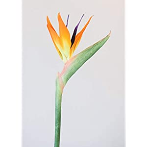 "Silk Decor Large Bird of Paradise Artificial Flower in Orange - 32"" Tall 115"