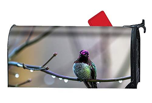 - FANMIL Garden Bright Animal Hummingbird Birds Hummingbirds Bird Magnetic Mailbox Wrap for Standard Size