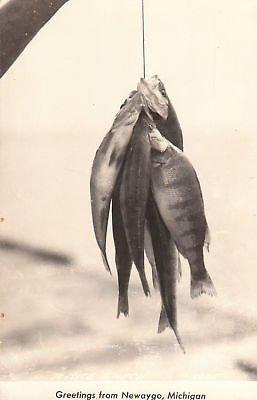 - E5767 MI, Newaygo Days Catch Photo Postcard