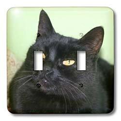 珍しい 3dRose B00D6RQ76A lsp_128378 3dRose_2 lsp_128378_2 黒猫の肖像画 緑の壁に黒い猫 黄色の目 ダブルトグルスイッチ B00D6RQ76A, 多様な:f691a706 --- svecha37.ru