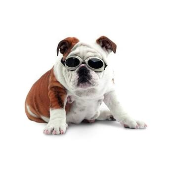 Doggles Dog Goggles ILS With Skull Crossbones/ Smoke Lens - Small