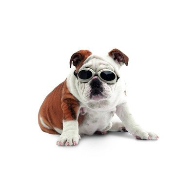 Doggles Dog Goggles ILS With Skull Crossbones/ Smoke Lens - - Doggles For Sale