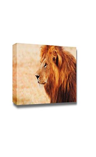 Wild Life Male Lion Portrait in Masai Mara Kenya Wall Decor
