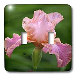 3dRose lsp_83273_2 Hybrid Bearded Iris Flower, Louisville, Kentucky Na01 Aje0110 Adam Jones Double Toggle Switch ()