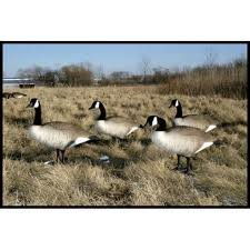 BigFoot Canada Goose Decoy, 4-Pack- Standards, CD-111487