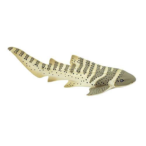 zebra shark - 2