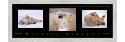 Poster Palooza Framed Nature's Kingdom-Polar Bears- 36x12 Inches - Art Print (White Barnwood Frame)