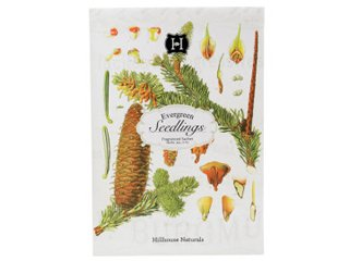 Evergreen Seedlings Paper Drawer Sachet by Hillhouse Naturals by  (Image #1)