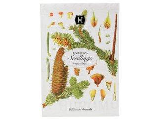 Evergreen Seedlings Paper Drawer Sachet by Hillhouse Naturals