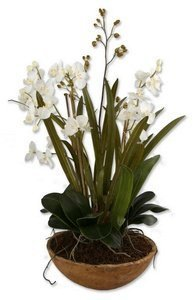 Uttermost Moth Orchid Planter Botanical by Uttermost by Uttermost (Image #1)