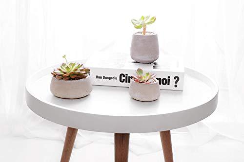 Amazon.com: T4U - Maceta de cemento para plantas de cactus ...